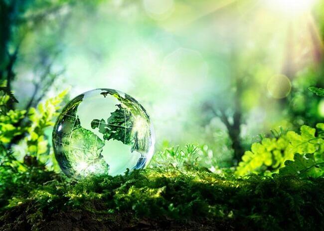 Ăn chay bảo vệ môi trường sống của chúng ta