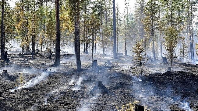 Ăn chay bảo vệ môi trường là góp phần giảm thiểu nạn chặt phá rừng