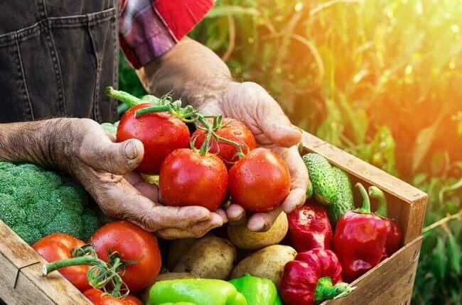 organic là gì? Những điều cần biết