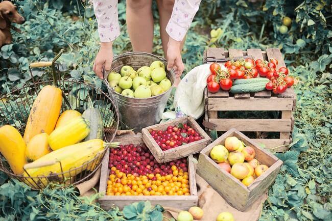 organic là gì? Bạn cần giải đáp?