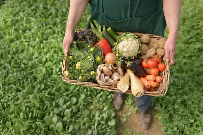 organic là gì? organic có thực sự tốt?
