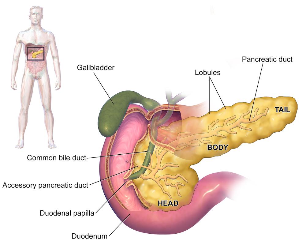 pancreatic cancer queasy)