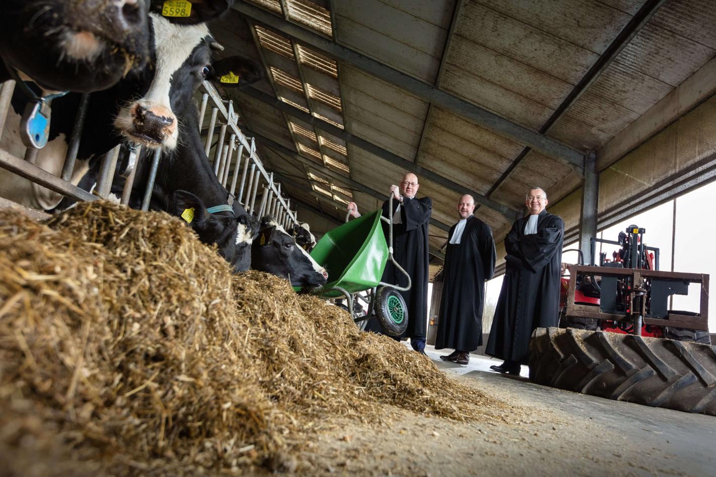 Advocaten van Brusse Masselink in koeienstal