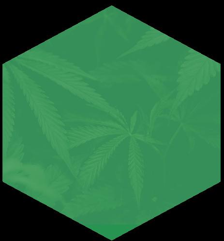 Cannabis Strategic Advisory Services
