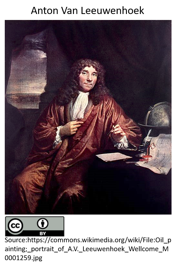 An oil paint picture of the famous Dutch microscopist, Anton van Leewenhoek, with lenses in his lab.