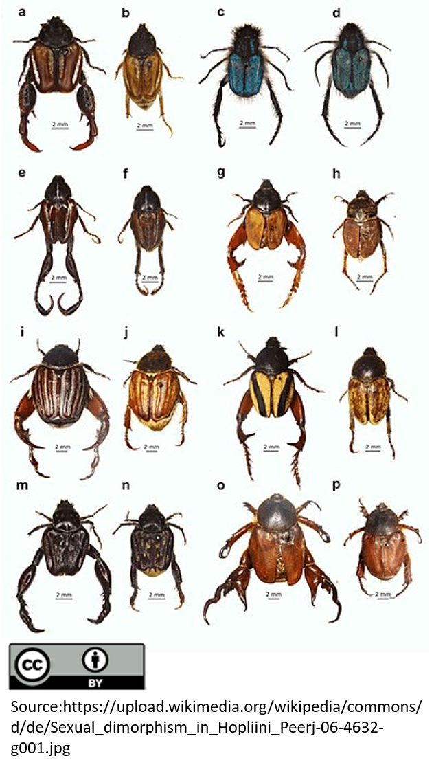 Image shows a diverse array of beetle species.