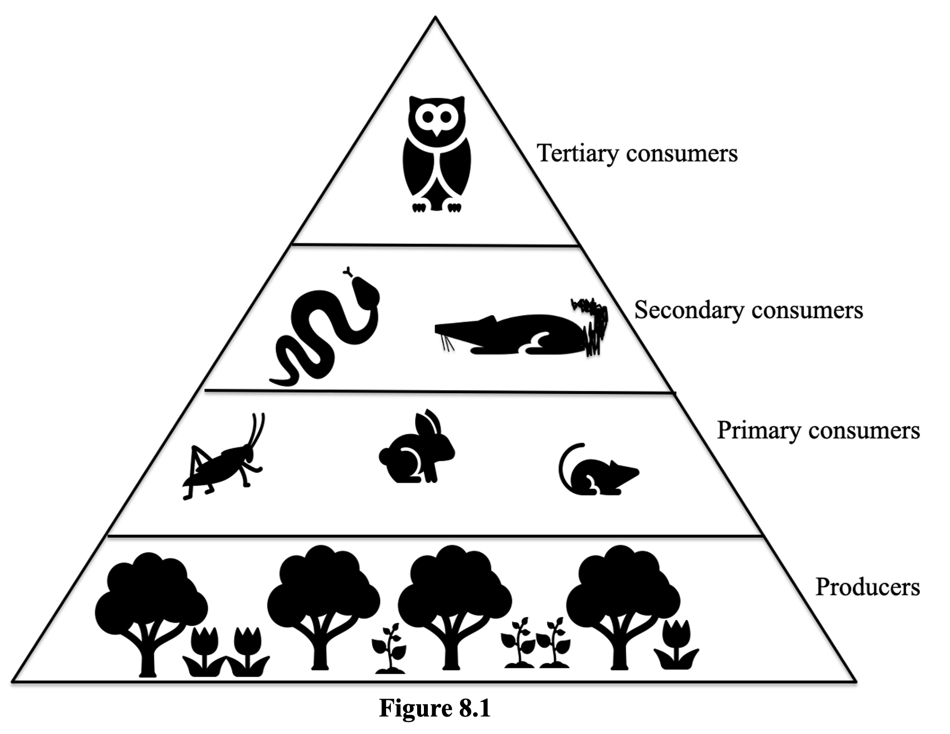 Figure 8.1 shows a simple triangular shaped tropic structure. At the base are the producers including trees and other plants. Above them are the Primary consumers including a grasshopper, a rabbit and a field mouse. Above them are the secondary consumers including a snake and a rodent. At the top us the tertiary consumer and owl.