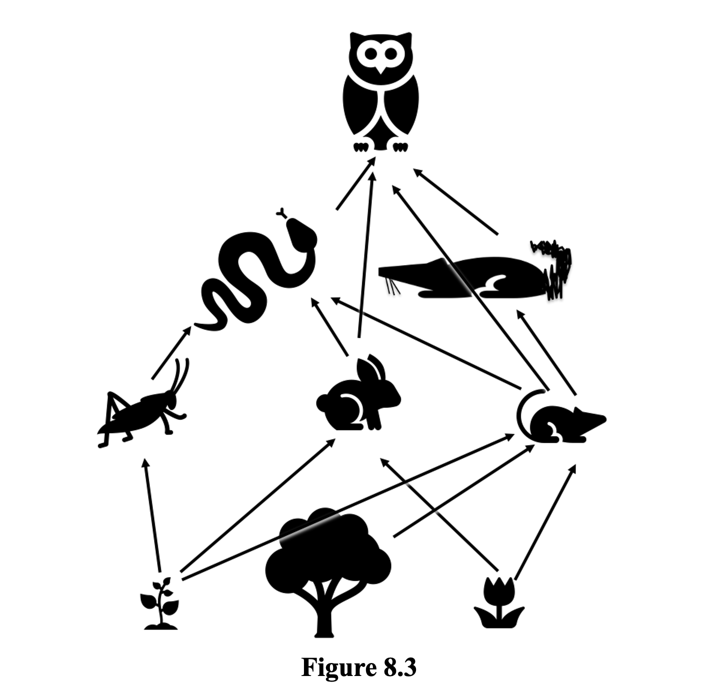 Figure 8.3 shows a simple food web. At the bottom of the food web there is a small leafy plant with arrows leading form it and pointing to a grasshopper, a rabbit and a mouse, the tree has a single arrow leading from it and pointing to the mouse and a small flowering planst has arrows leading from it and pointing to the rabbit and the mouse. Above them in the food web is he grasshopper with a single arrow leading from it and pointing to the snake, the rabbit with lines leading from it and pointing to the snake and to the owl, and a mouse with three lines leading from it and pointing to the snake, the owl and the shrew. Above that is a snake with arrows leading from it and pointing to the owl, and the shrew with a single arrow leading from it to the owl. At the top of the food web sits the owl.