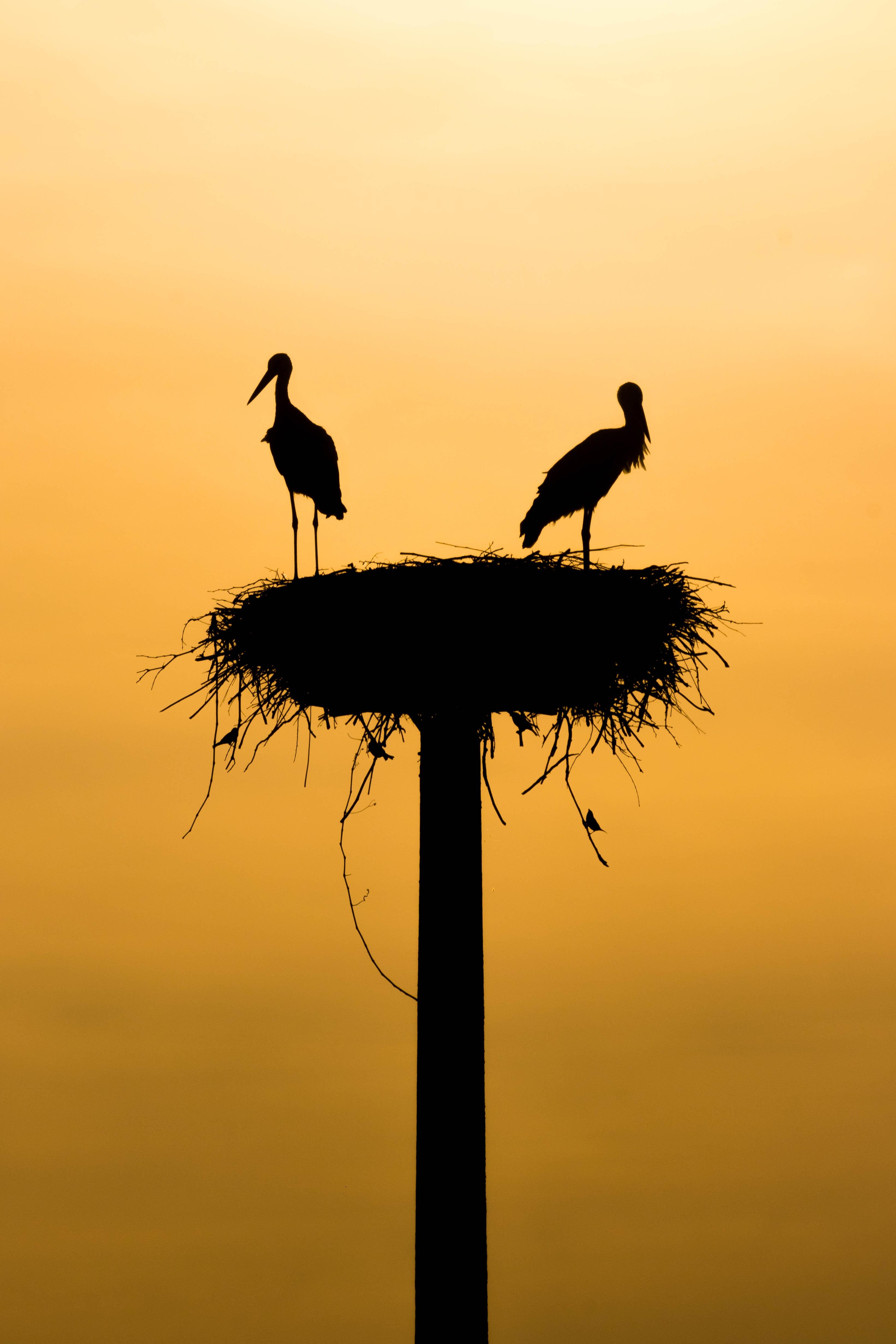 Extraction nid d'oiseau