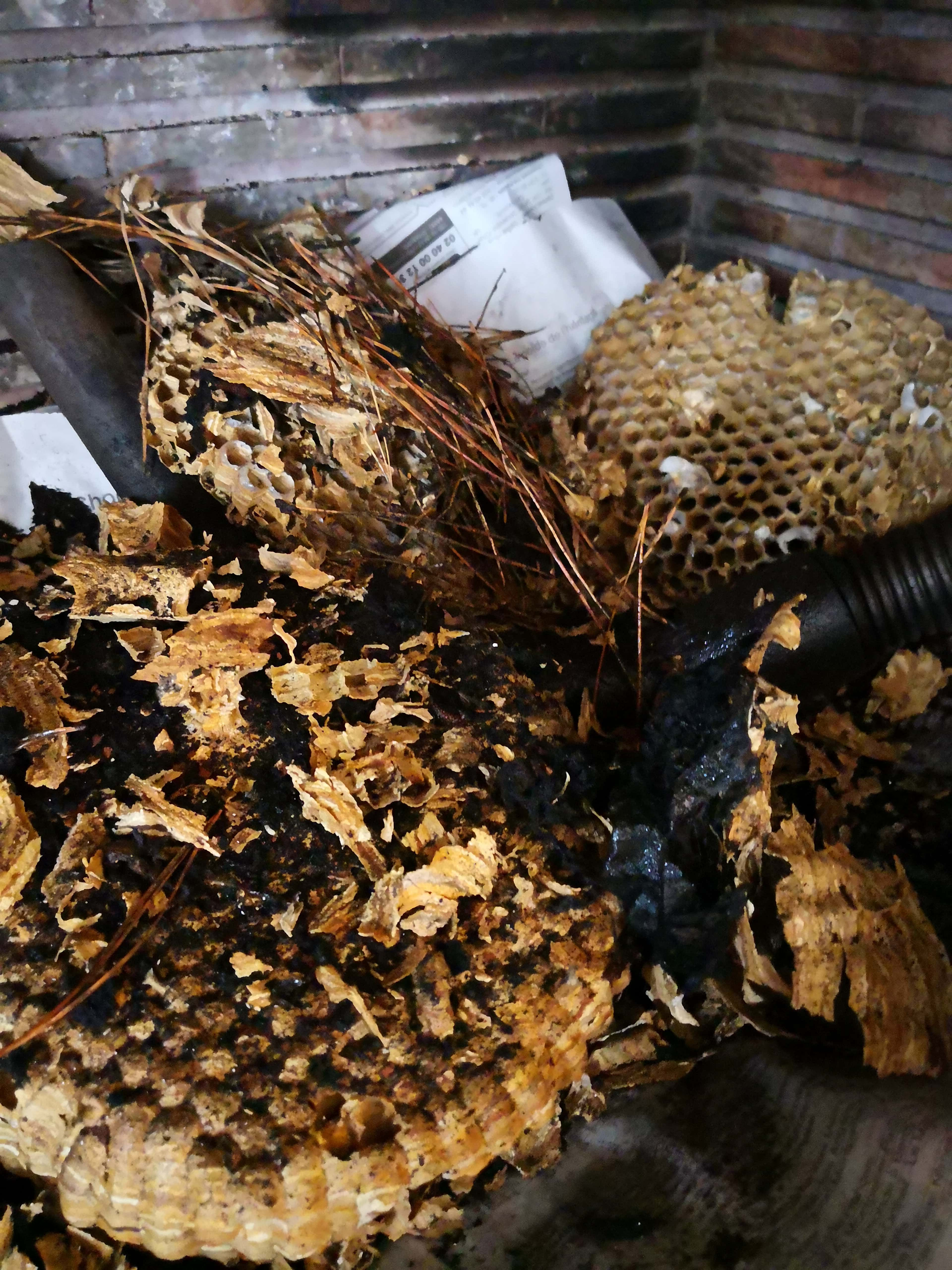 Ramonage avec récupération d'un nid de frelons