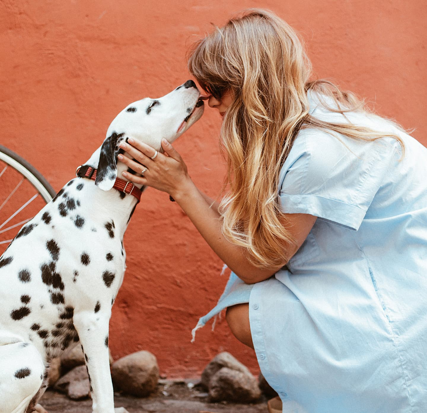 Photo of an emotional support dalmation