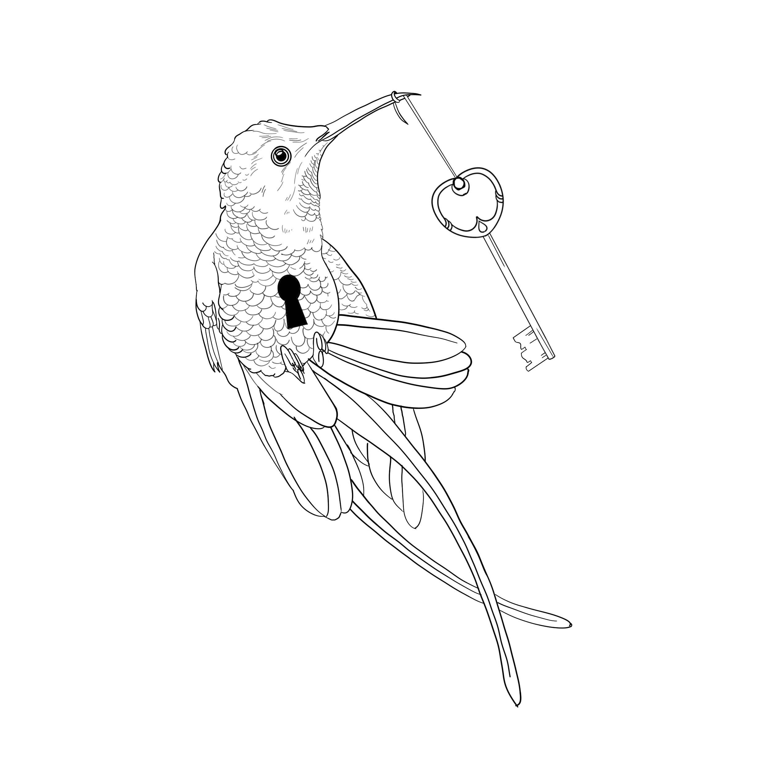 colibrì chiave serratura
