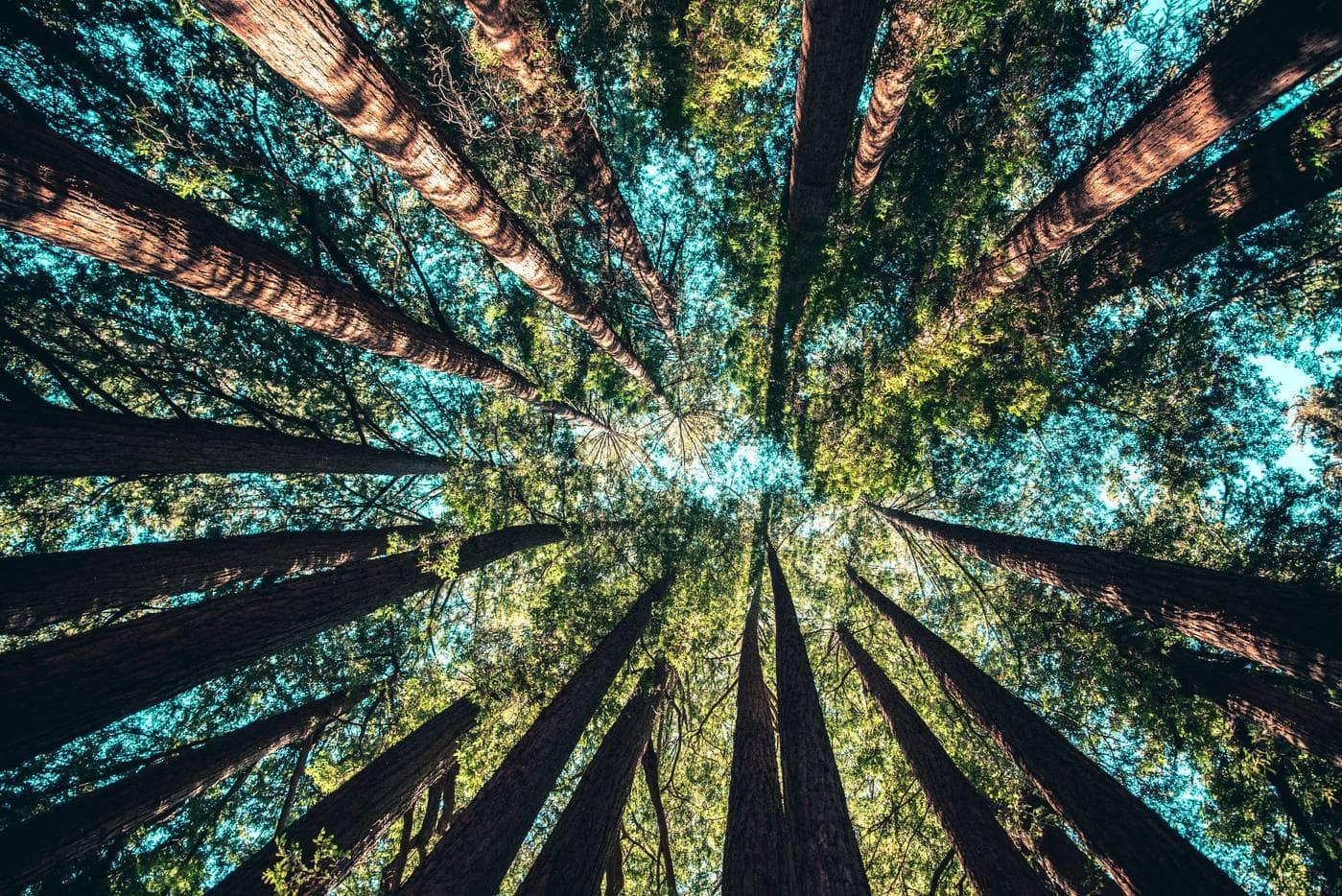 Arbres et forêt nature