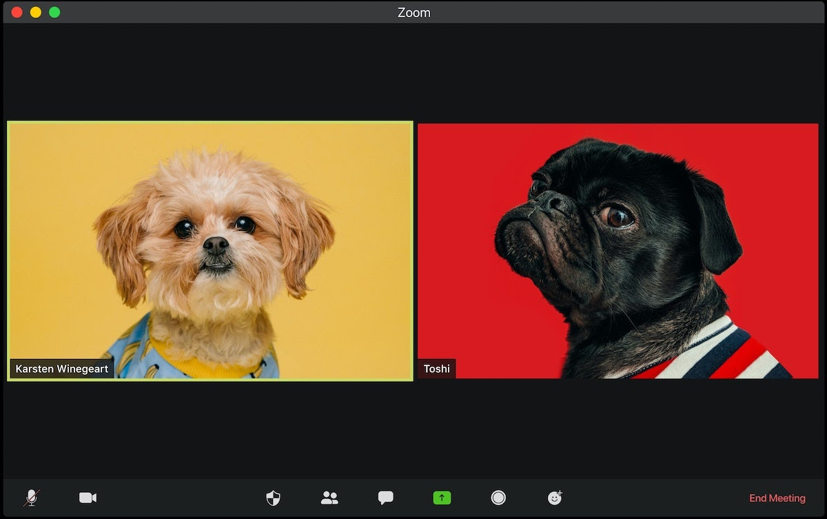 Zoom call with Dogs