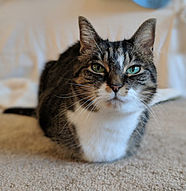 brown and white tabby cat laying on floor