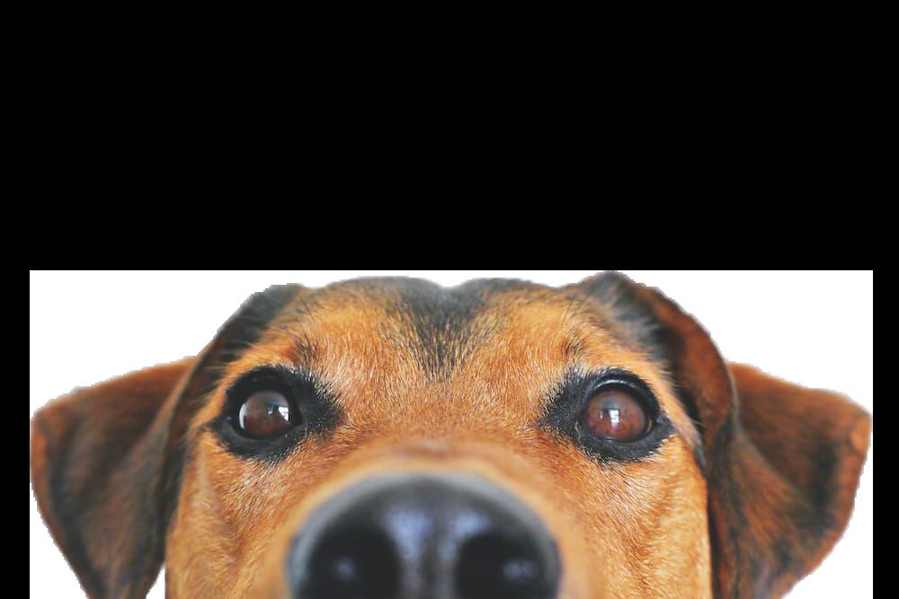 A cute dog picture.