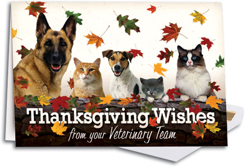 Just a reminder to our clients that we will be closed for Thanksgiving, Thursday Nov. 22, 2018. We will resume normal hours on Friday the 23rd. There is NO doggy daycare Nov. 21st, 22nd, or 23rd.