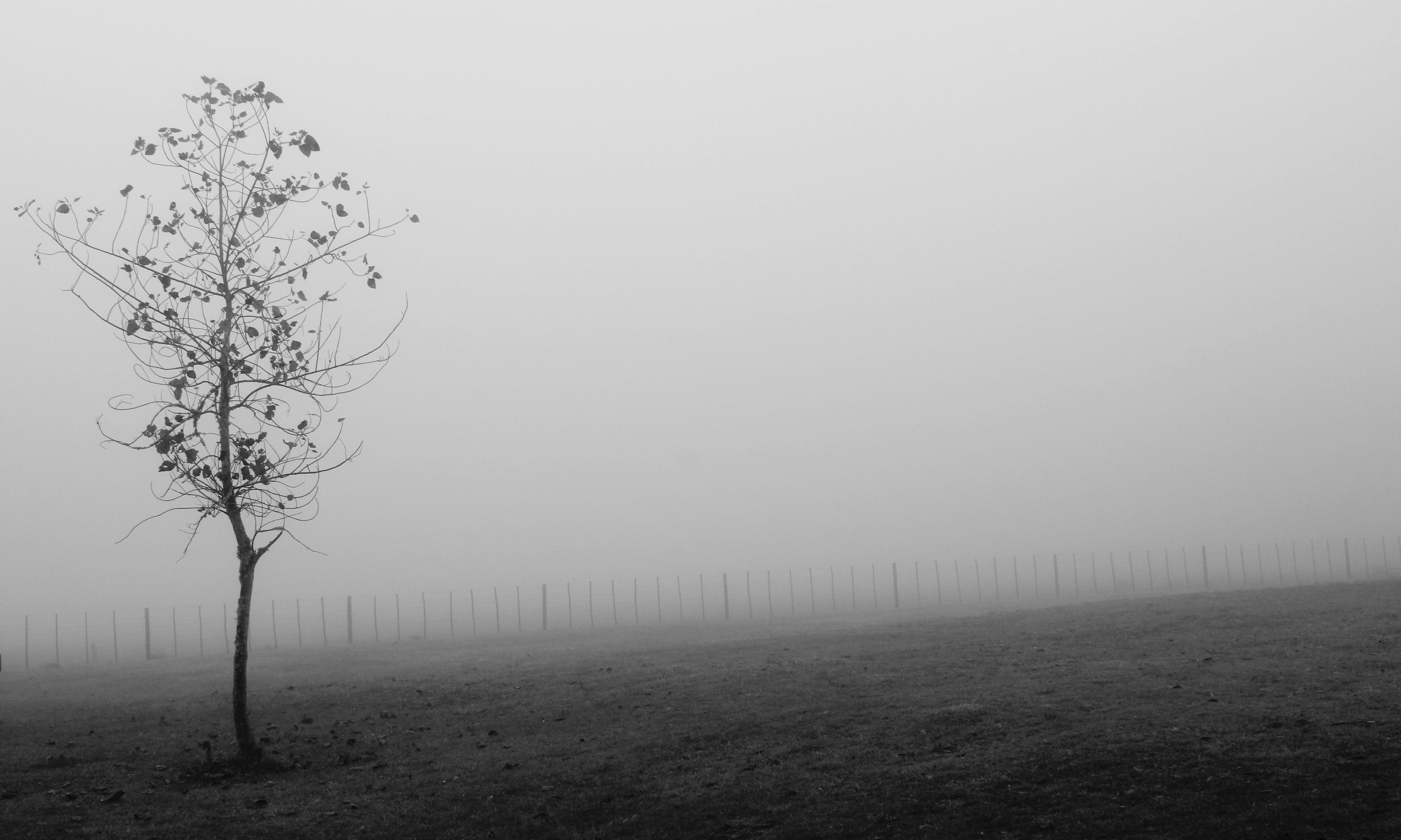 A Cabin in the Fog