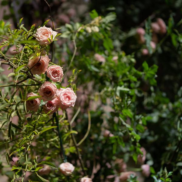 foto fiori 9