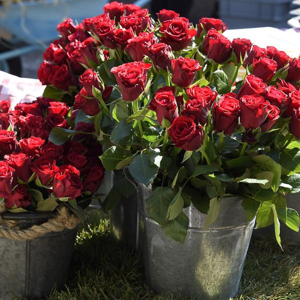 foto rose fiori