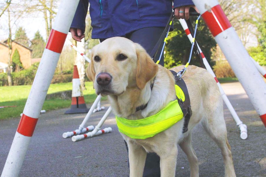 Guide dog with visually impaired person