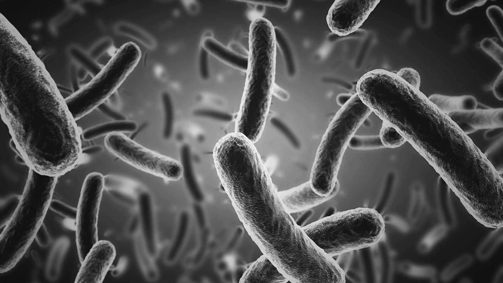 bactéries 3D