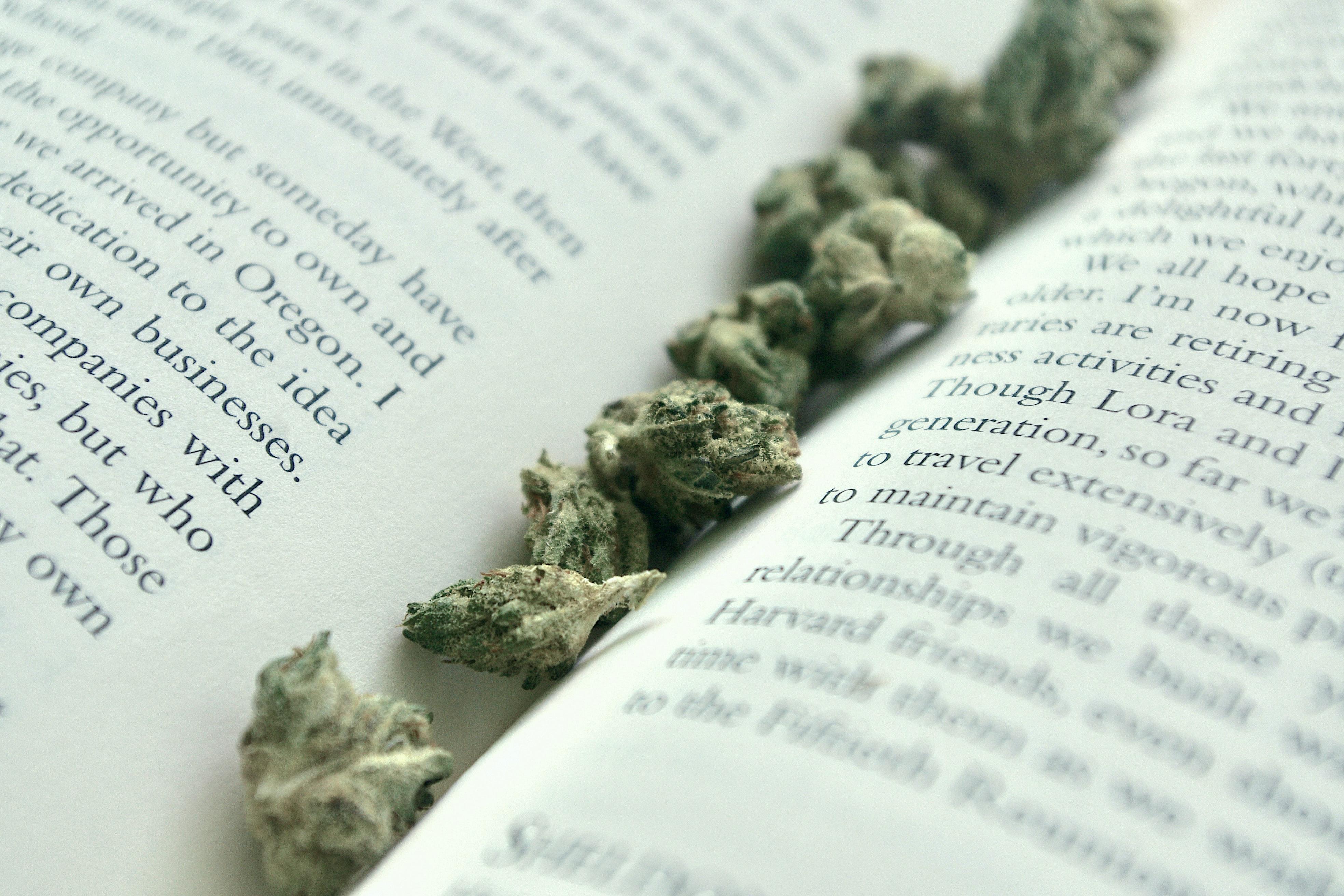 Cannabis flower in book