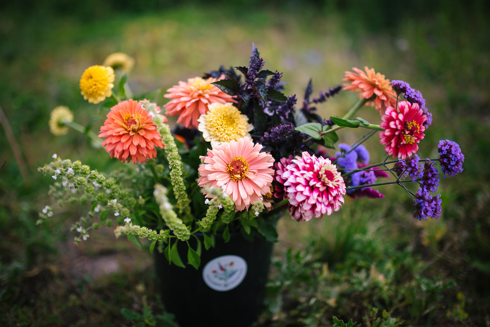 Calliope Flowers are displayed in this Montana photograph taken at their farm.