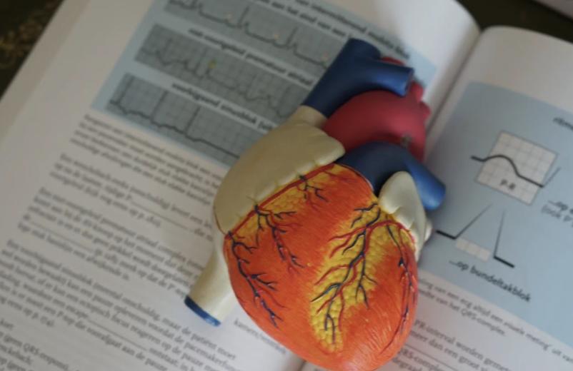 Understanding Heart Disease and Your Risk