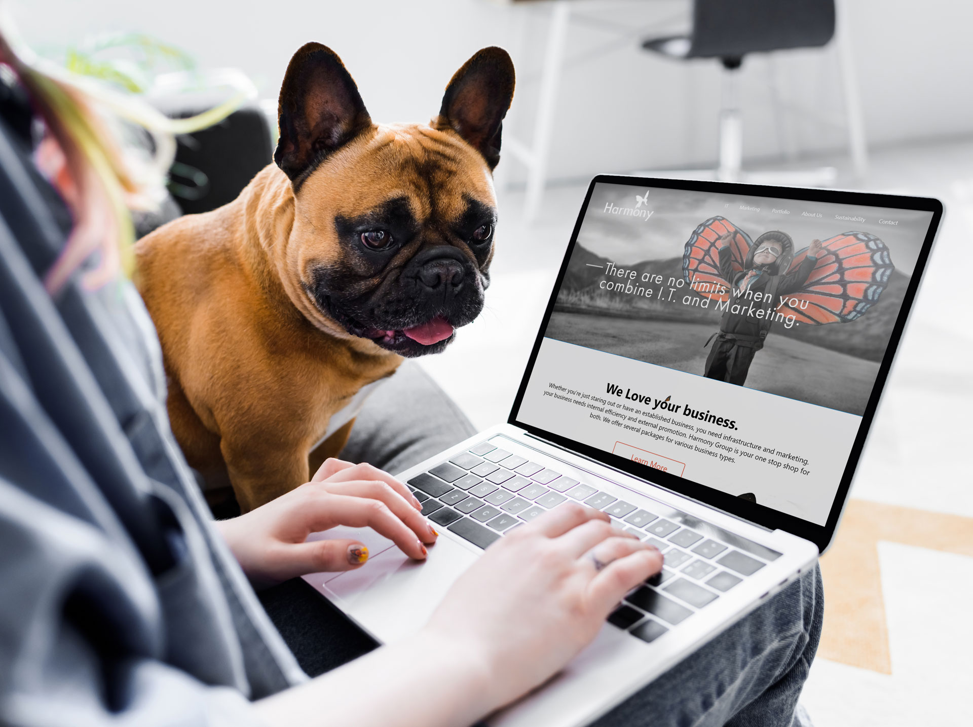Person at home with their pug watching them work