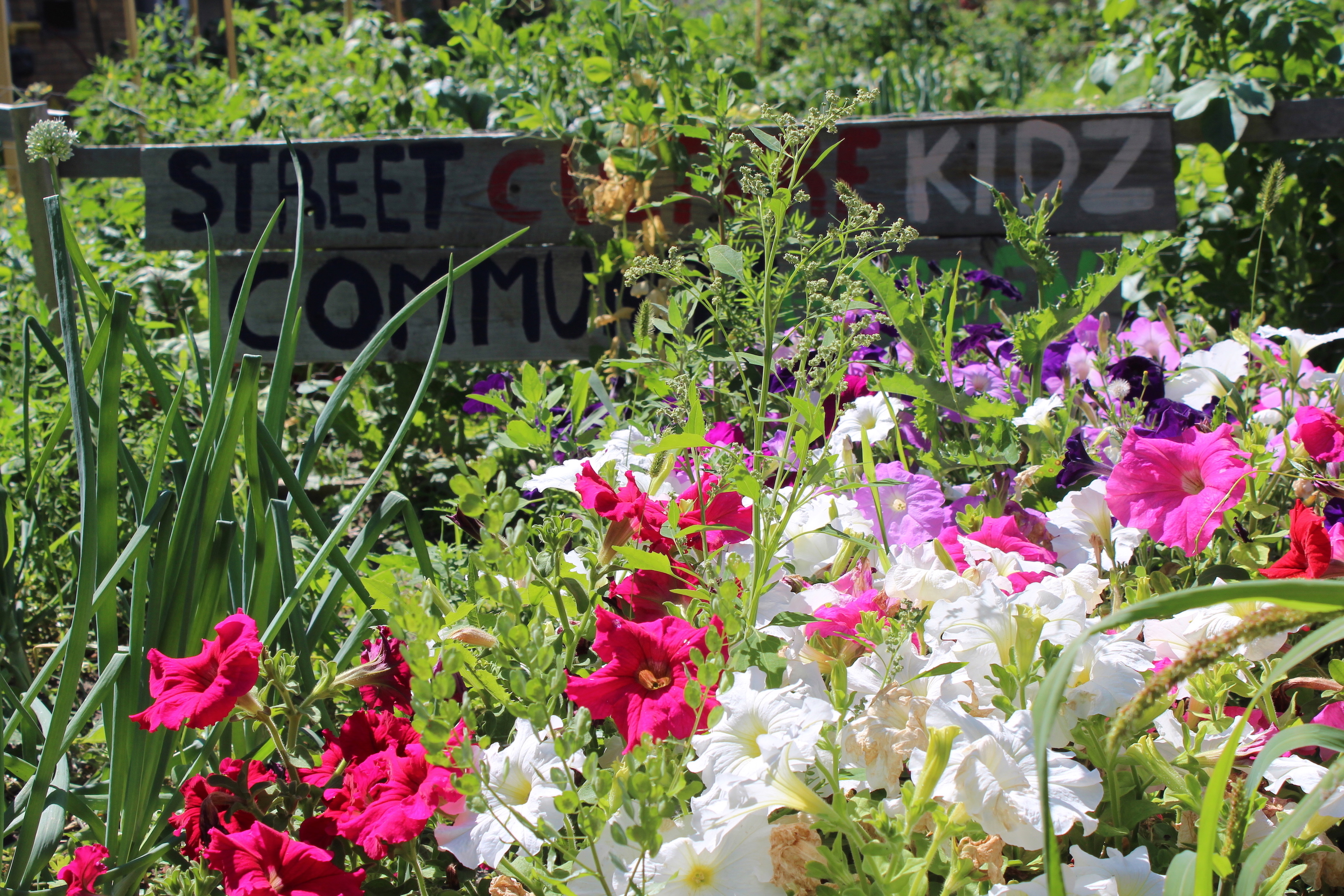 Street Culture Project's garden