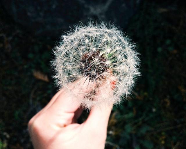 Aller-geeeeez! 5 Ways To Reduce Allergens in Your Home