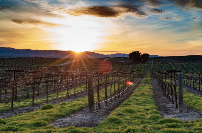 spanish vineyard