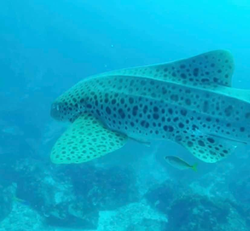 Ocean Conservation with Saltwater Sistas