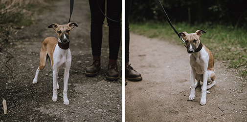 Buy and sell dog walking services on Aliud