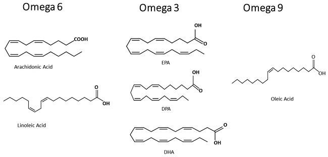 Phân biệt cấu trúc của phân tử Omega 3,6 và 9