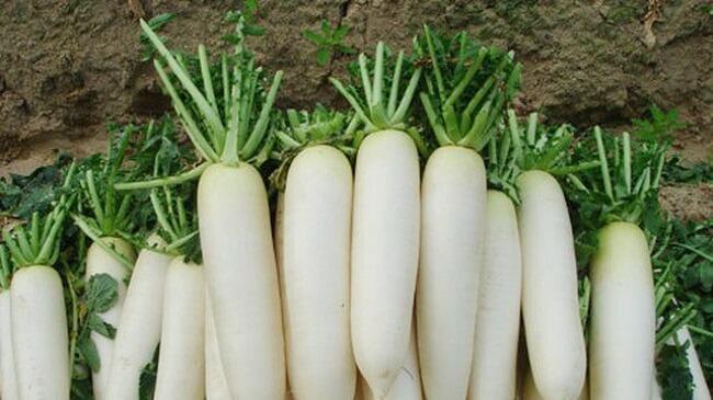 Trị ho khan bằng củ cải trắng và gừng