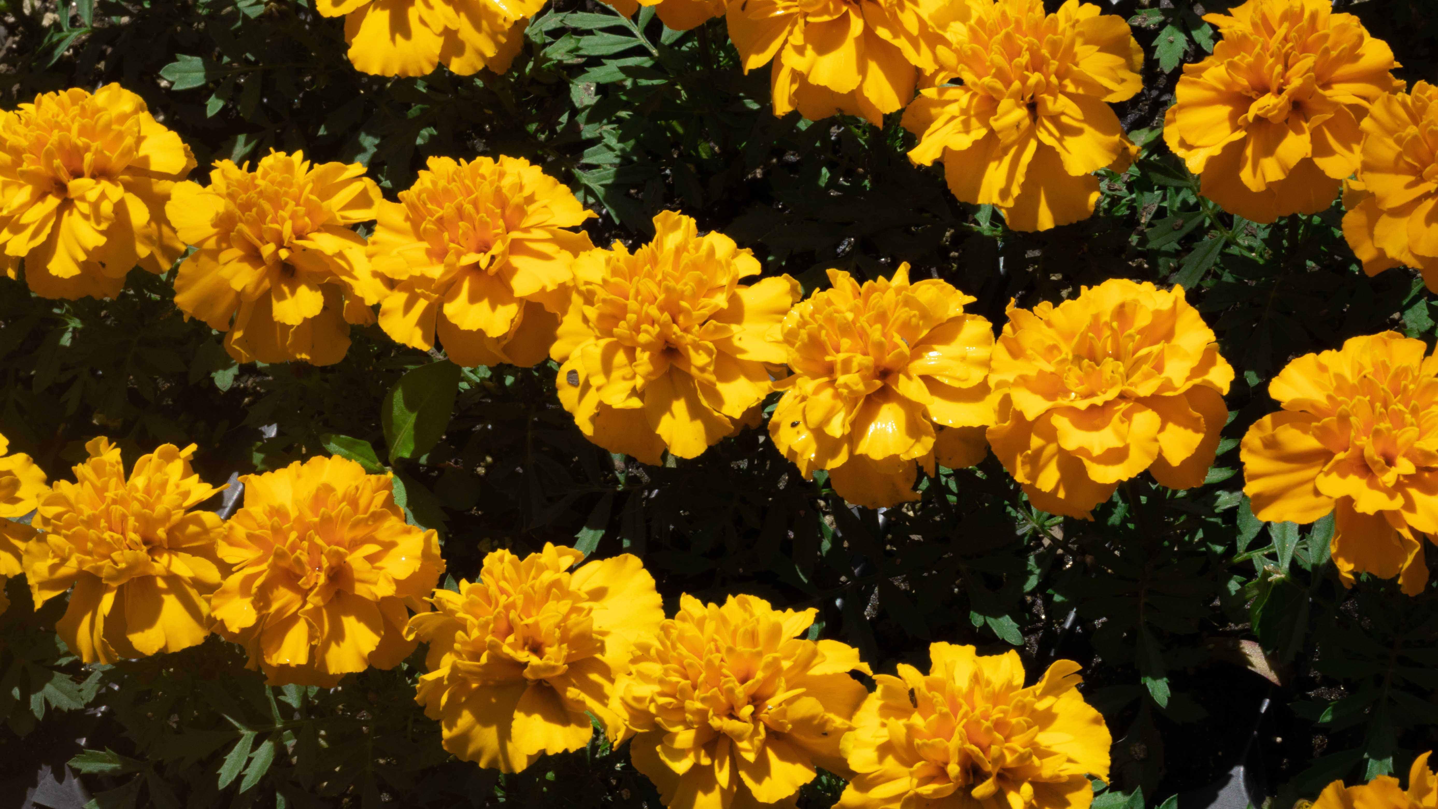 flowers crop image