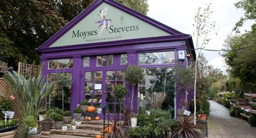 Purple exterior covered in flowers of Moyses Stevens in Hampstead Garden Suburb.