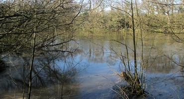 View of a lake at the London Loop in Totteridge N20.