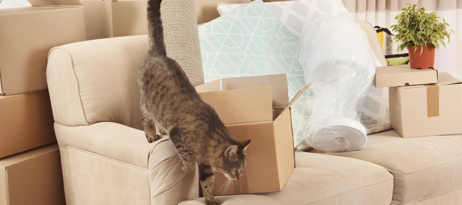 A cat walking around a new home with boxes to be unpacked