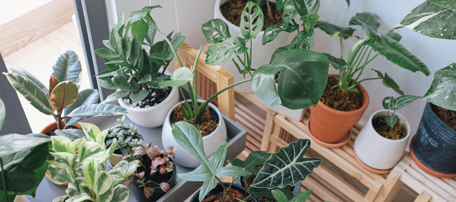A selection of household plants in pots being prepared for a house move