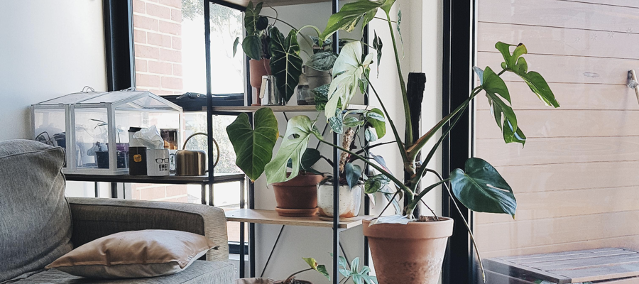 A variety of house plants in a bedroom