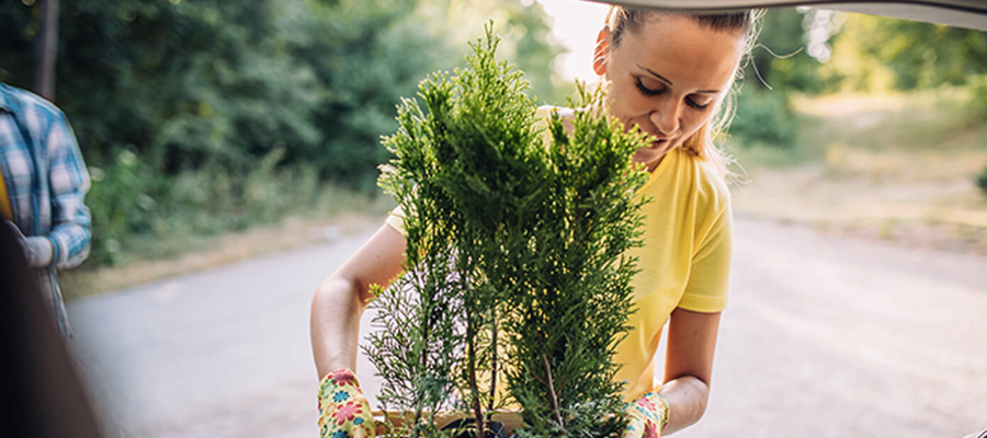 Woman packing plants into a car boot