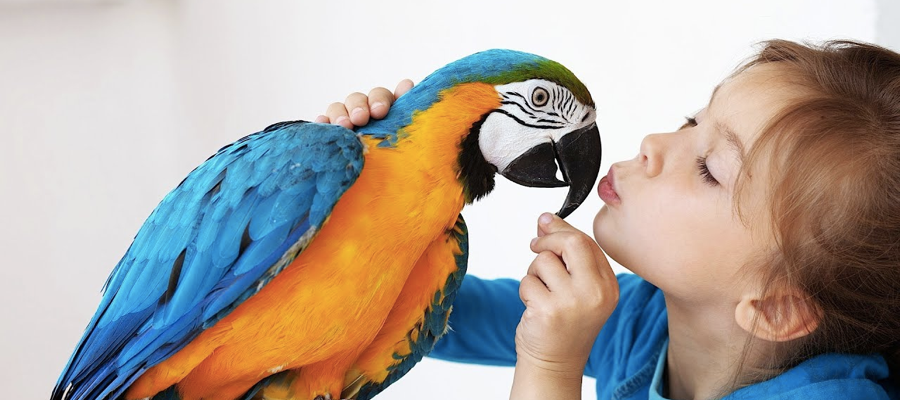A child holding the beak of a parrot and stroking it's head