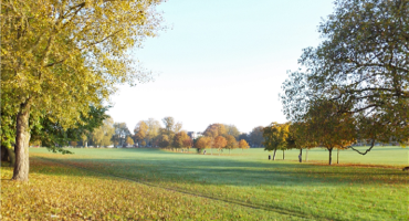 Large field in the autumn at Peckham Rye Park and Common.