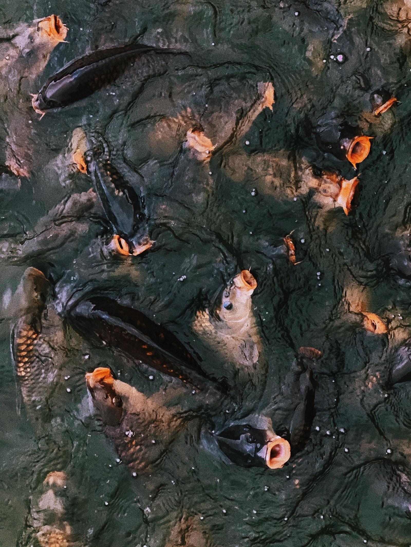 Fish, Marks Hall