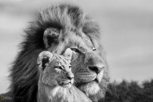 Joubert Lions