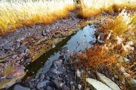 Oil Seep -