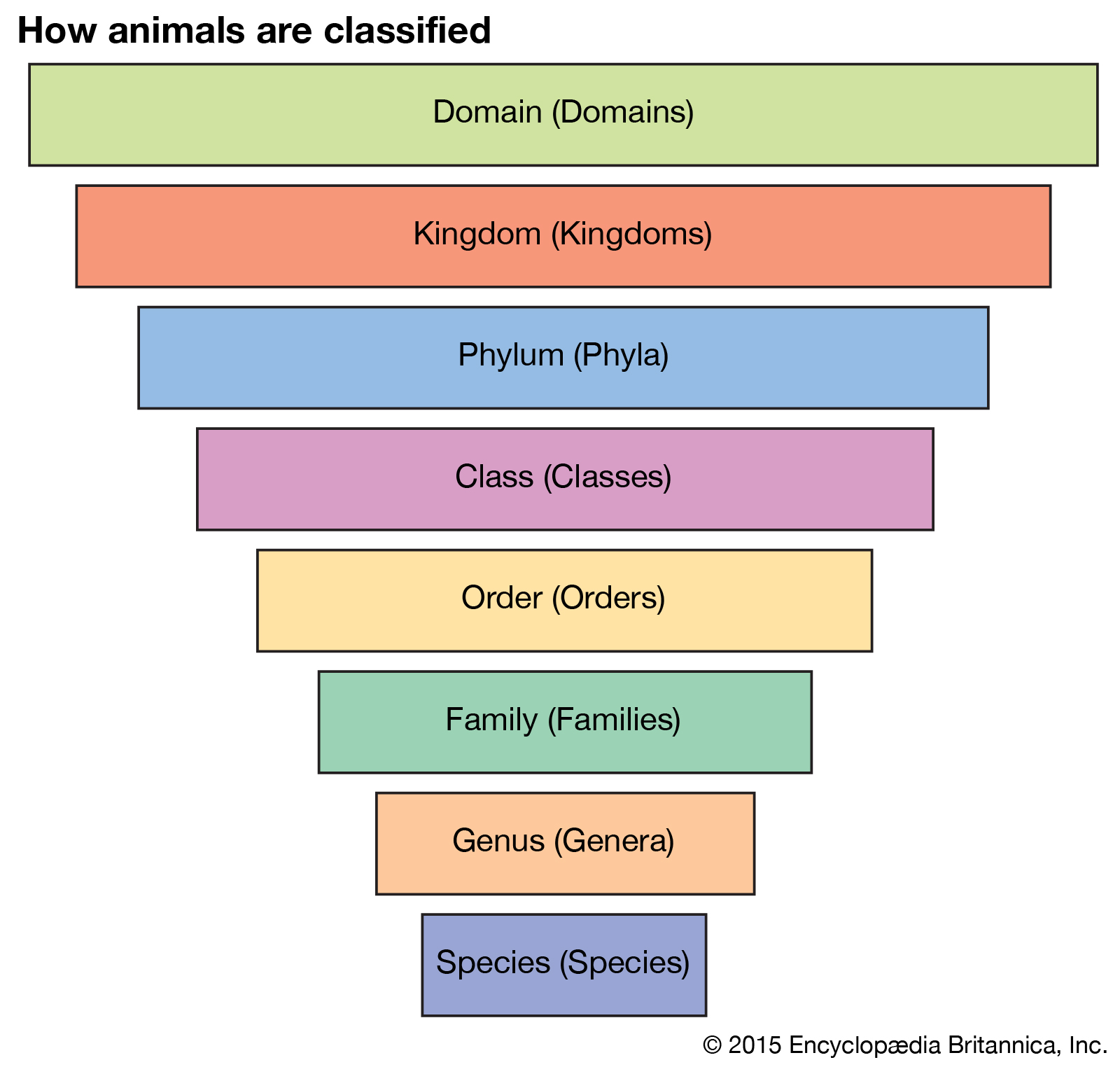 taxonomy | Definition, Examples, Levels, & Classification | Britannica